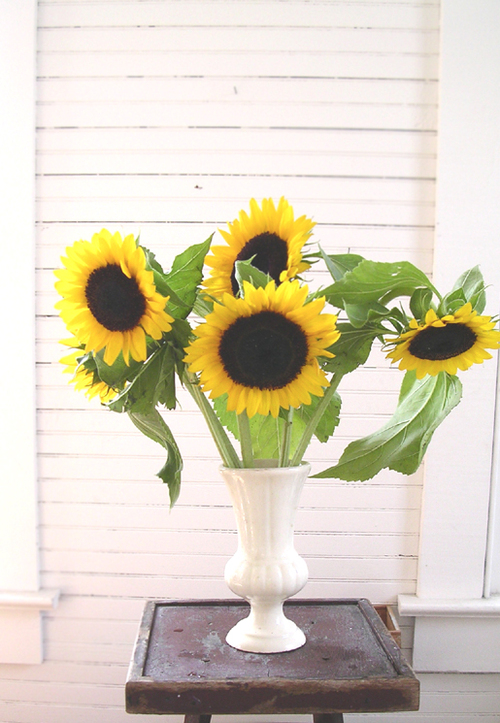 Sunflowers_2